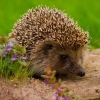 A thread for little critters - last post by Hedgehog